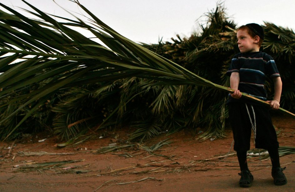 """A Jewish boy caries a palm branch in the town of Bnei Brak near Tel Aviv Wednesday Oct. 4, 2006. The palm branches are used to roof a temporary house called a """"Sukka, """" which is built and lived in during the week-long Jewish holiday of Sukkot. Sukkot comemmorates the Israelites 40 years of wandering in the desert and a decorated hut or tabernacle is erected outside religious households as a sign of temporary shelter. The weeklong holiday begins on Friday. (AP Photo/Ariel Schalit)"""