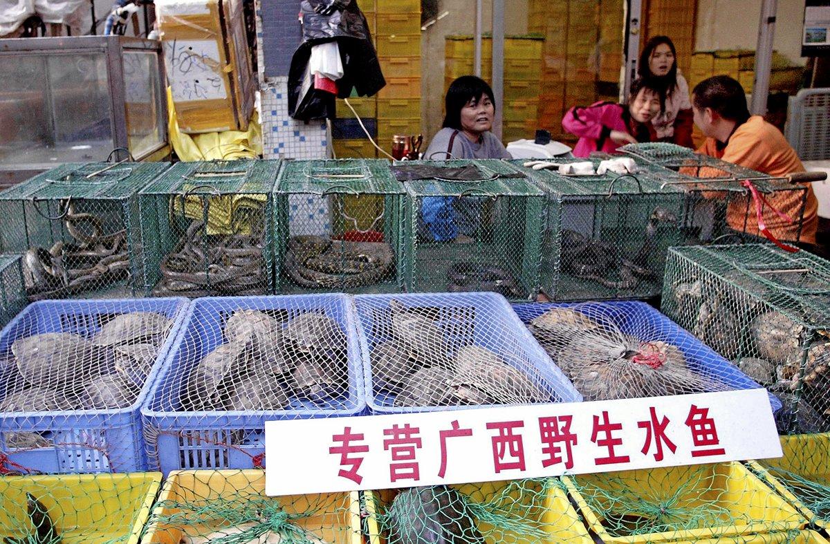 Et billede fra den kinesiske by Shenzhen med et dyremarked, der sælger dyr som slanger og skildpadder. Billedet er taget før udbruddet af corona. I forbindelse med coronakrisen har de kinesiske myndigheder lukket markeder, der sælger vilde dyr. Traditionen med at sælge vilde og levende dyr er med til at sprede virus fra dyr til mennesker, og hvis ikke disse markeder lukkes permanent, risikerer vi nye epidemier, lyder advarslen fra den britiske forsker Diana Bell. – Foto: AFP/Ritzau Scanpix.