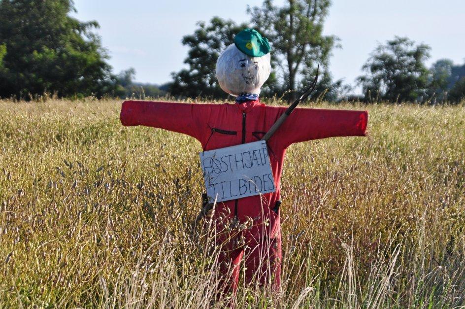 """""""Æ fissemand"""" er en sønderjysk skik, der handler om at placere en mandsstor dukke lavet af kornneg på marken hos den bonde i landsbyen, der bliver sidst færdig med at høste sin mark.  – Foto: Arne Reggelsen, Museum Sønderjylland."""