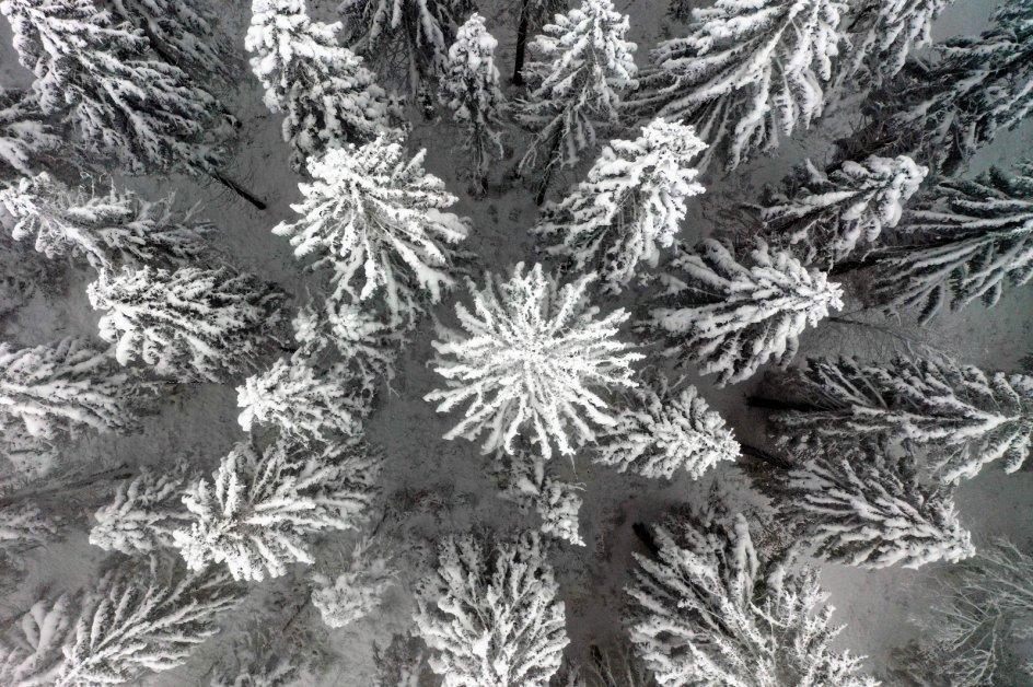 I Tyskland lokker vintervejret i de nordlige dele af landet mange turister til. Det sneklædte landskab, der her er fotograferet oppefra, er fra bjerget Nordhelle, der med sine 663 meter over havet er den højeste top i Ebbe-bjergene. Foto: Ina Fassbender/AFP/Ritzau Scanpix.