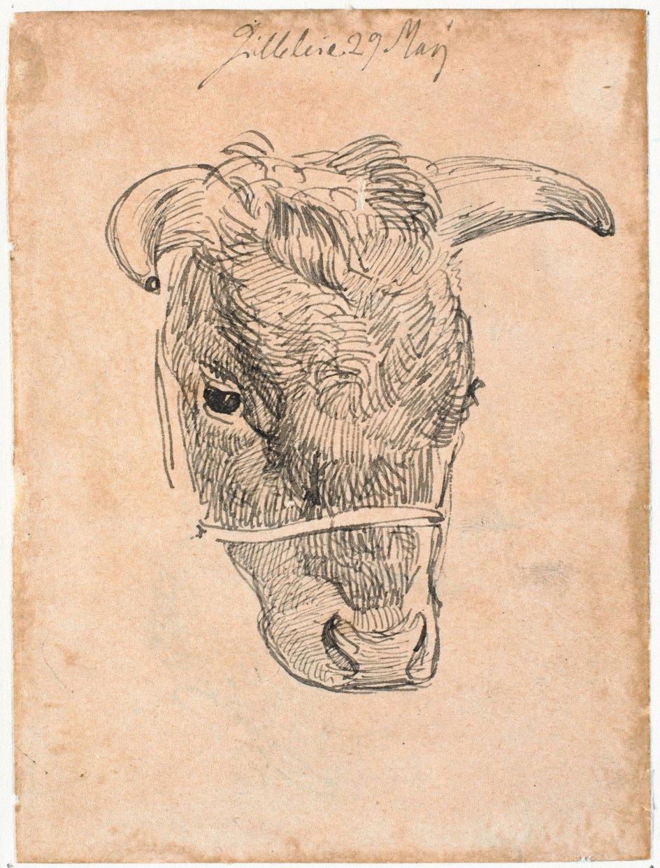 """Der er noget trygt og roligt over køer, mener forfatter og biolog Anton Raundahl. Her ses skitsen """"Hoved af en ko"""" af Johan Thomas Lundbye, dateret 1843. – Foto: Statens Museum for Kunst."""