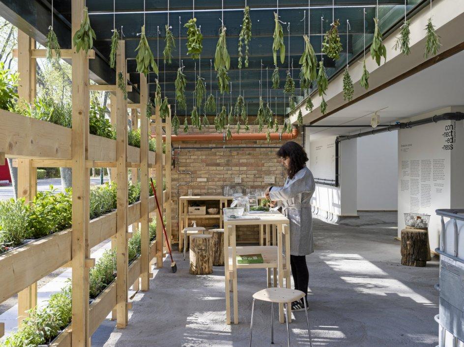 """I og uden for den danske pavillon dyrkes forskellige urter, der anvendes i te. Teen kan man drikke på stedet, mens man overvejer pavillonens fortælling om – som udstillingens titel lyder – """"Con-nect-ed-ness"""" (Forbundethed)."""