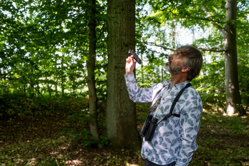 """Martin Brygmann bruger appen """"Collins Bird Guide"""", hvis han er i tvivl om en stemme. Her driller han en rødhals, som forveksler telefonens lyd med en rigtig fugl."""