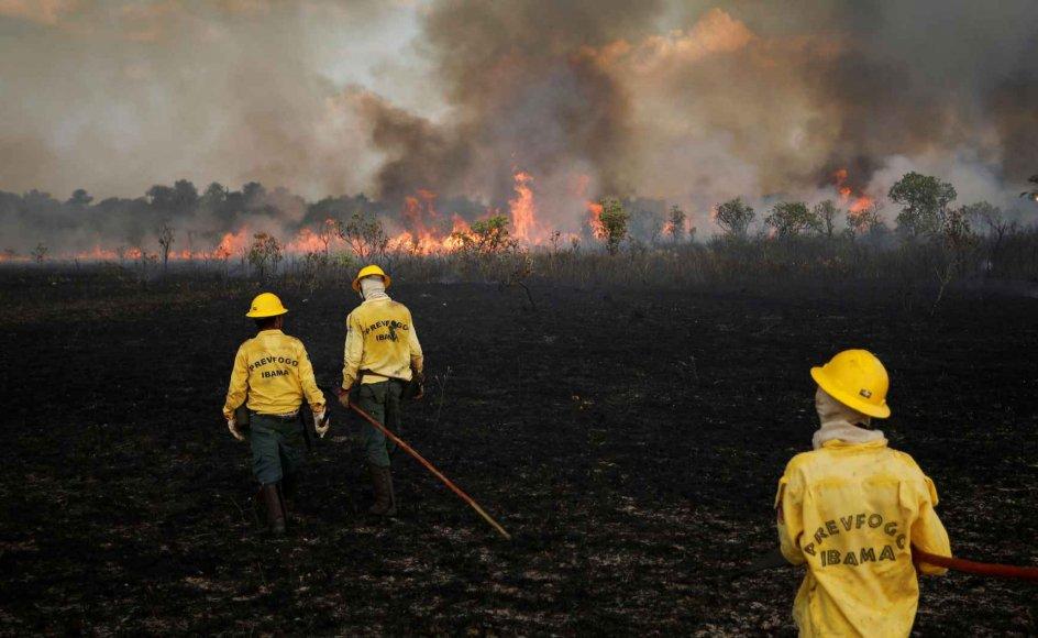 Rekordstort antal menneske er blevet dræbt i deres kamp for miljø og lokalbefolkninger. Arkivfoto af den brændende Amazona-regnskov i 2019.