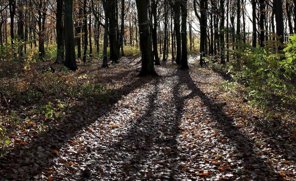 Meget tyder på, at skovbegravelsespladserne vil fortsætte med at brede sig rundt i landet.