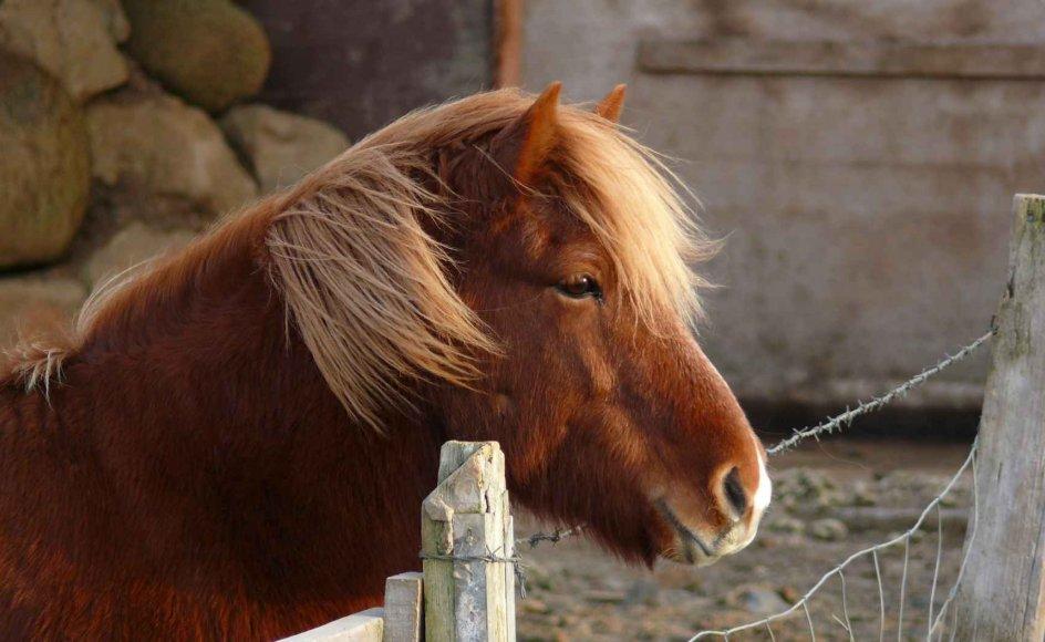 Heste kan hjælpe psykisk syge.