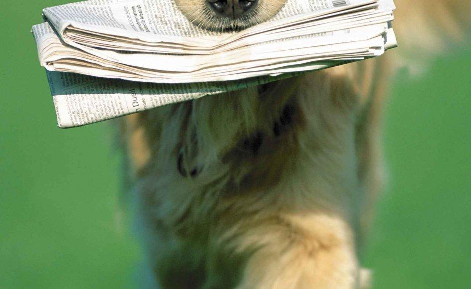 Hvor meget bid er der i Kristeligt Dagblad? Se læsernes dom