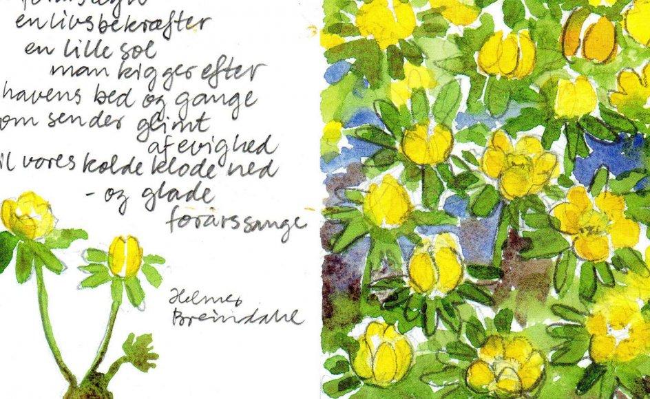 """Helmer Breindahl fra Dianalund har sendt denne akvarel og tekst, som han selv har lavet. Han skriver: """"En erantishyldest: Et forårstegn en livsbekræfter en lille sol man kigger efter i havens bed og gangesom sender glimt af evighed til vores kolde klode ned – og glade forårssange."""""""