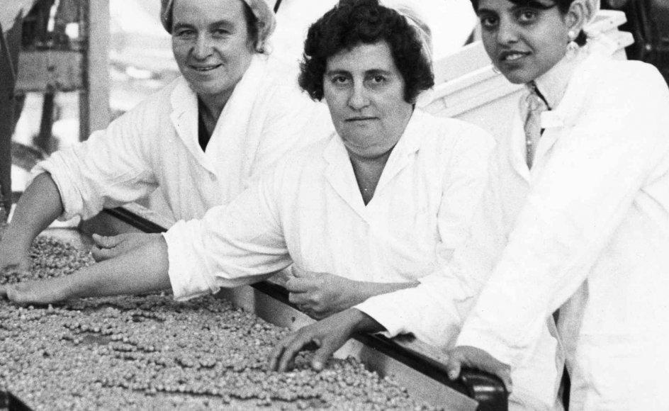 Jugoslaviske kvinder på arbejde på Odense Konserves-fabrik. Meningen var, at gæstearbejderne senere skulle rejse hjem igen. Udlændingeloven i 1983 forbedrede for alvor retsstillingen for asylsøgere, og den liberale lovgivning var ifølge historikeren Lars Hovbakke Sørensen en af årsagerne til, at Danmark i dag er et mere multikulturelt samfund end tidligere. –