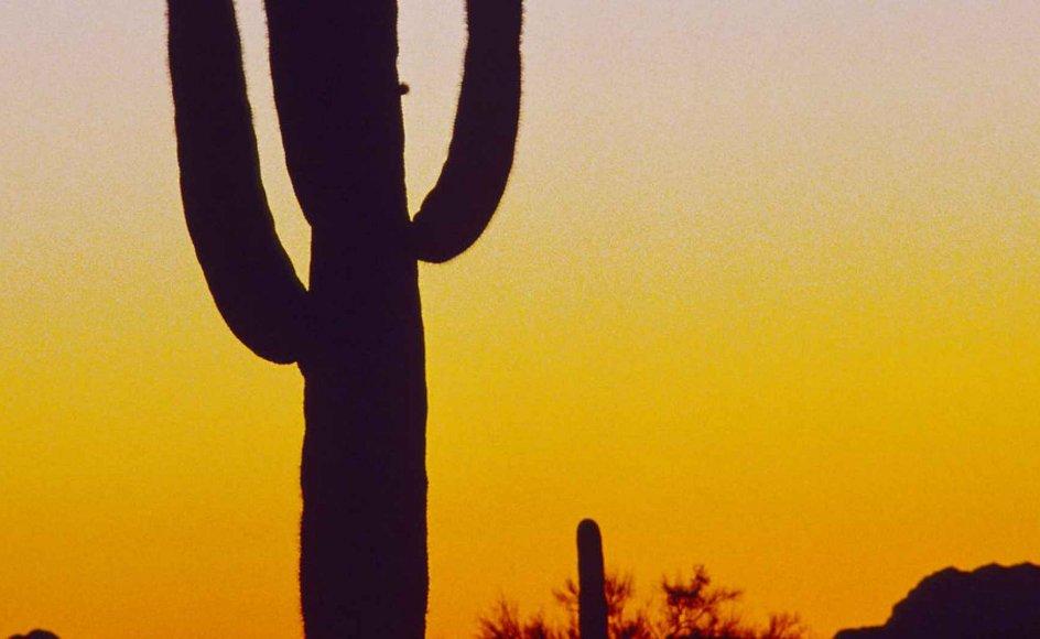 """I """"Sønner"""" befinder hovedpersonen Jeannie sig på en ranch i Texas."""