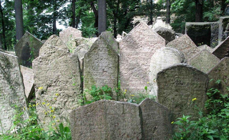 Polen vil gøre skaden fra holocaust god igen ved at returnere jødiske gravsten. Her er det sten på den jødiske kirkegård i Prag. Foto: Scanpix