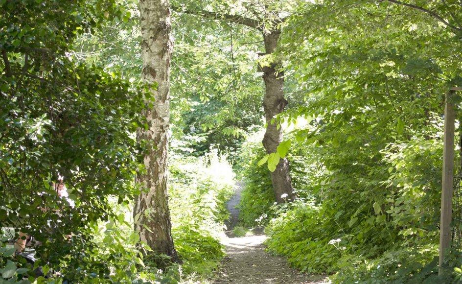 Ro har siden slutningen af 1700-tallet været noget, den enkelte skulle finde og typisk ved at opsøge et fredfyldt sted som skovstien her på vej mod Bagsværd Sø og lade den ydre ro forplante sig til det indre. -