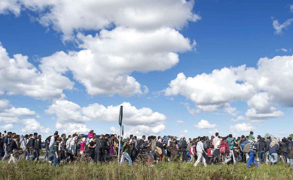 I søndags kom flere hundrede flygtninge til den lollandske havneby, og tilstrømningen fortsatte i går. Nogle håber på asyl i Danmark, men langt de fleste vil gerne videre til vores skandinaviske nabolande, især Sverige.