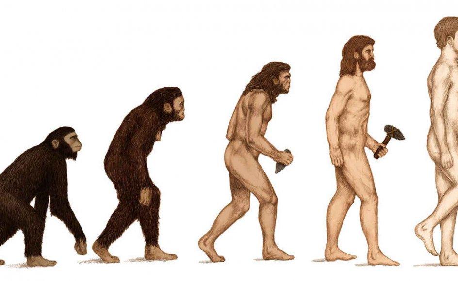 Mutation har aldrig ført noget nyt og godt med sig, mener teologiprofessoren Thomas Woodward. Her er den menneskelig evolution, ifølge darwinistisk teori, illustreret fra de tidlige arter til homo sapiens.