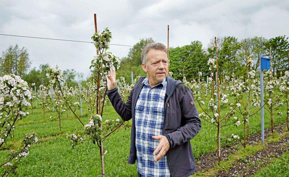 Et musvitpar kan spise sig igennem tre kilo skadedyr på en sæson, fortæller Michael Lindebjerg, der blandt andet satser på fuglenes hjælp i sin nyetablerede æbleplantage på Samsø. –