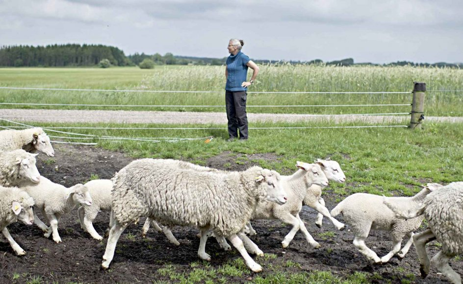 """""""Jesus har en plan for mig, ligesom jeg nu har lavet en vinterplan for mine dyr. Jeg skal bare følge Jesus, ligesom fårene følger efter mig. Jeg tænker på hver arbejdsdag som en lille prædiken,"""" siger Åse Svendsen."""
