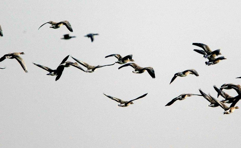 Fugleværnsfonden har arvet 15 millioner kroner fra en fugleven. Pengene skal bruges til yderligere opkøb og sikring af flere fristeder til fuglelivet.