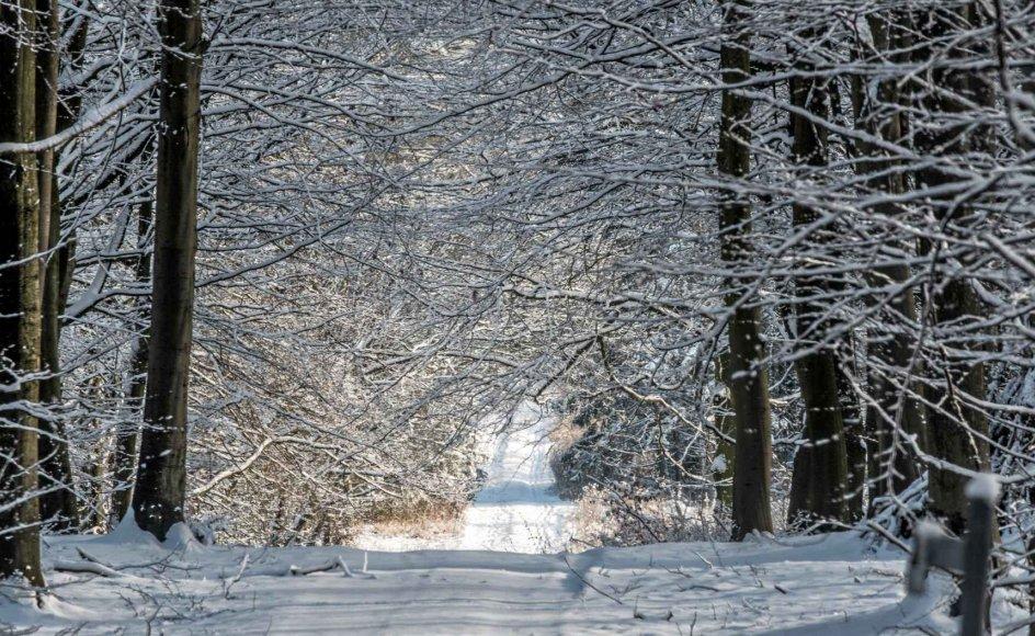 Ugen byder på nedbør i varierende mængder, og der vil være tale om både regn, slud og sne. – Arkiv