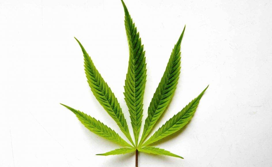 Der afsættes 22 millioner til den nye forsøgsordning med medicinsk cannabis, der begynder den 1. januar 2018.