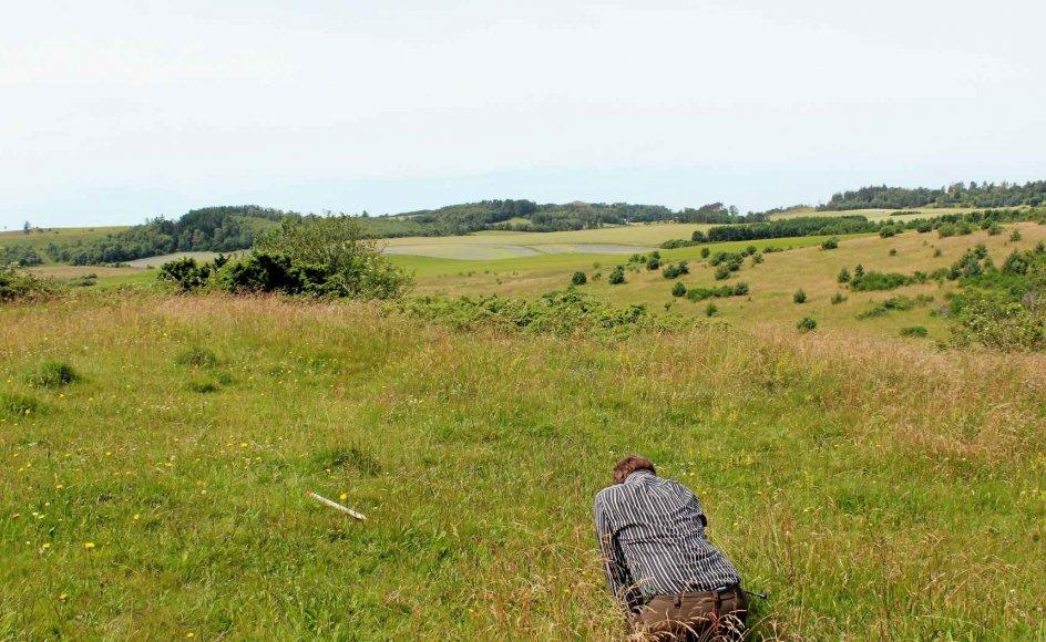 En botaniker registrerer de mange sjældne planter på Basballes store kobjælde-bakke i Mols Bjerge. –