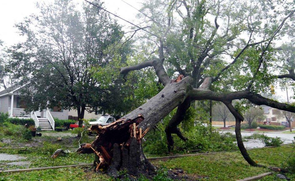 Et væltet træt i Wilmington i North Carolina i USA, hvor stormen Florence hærger.