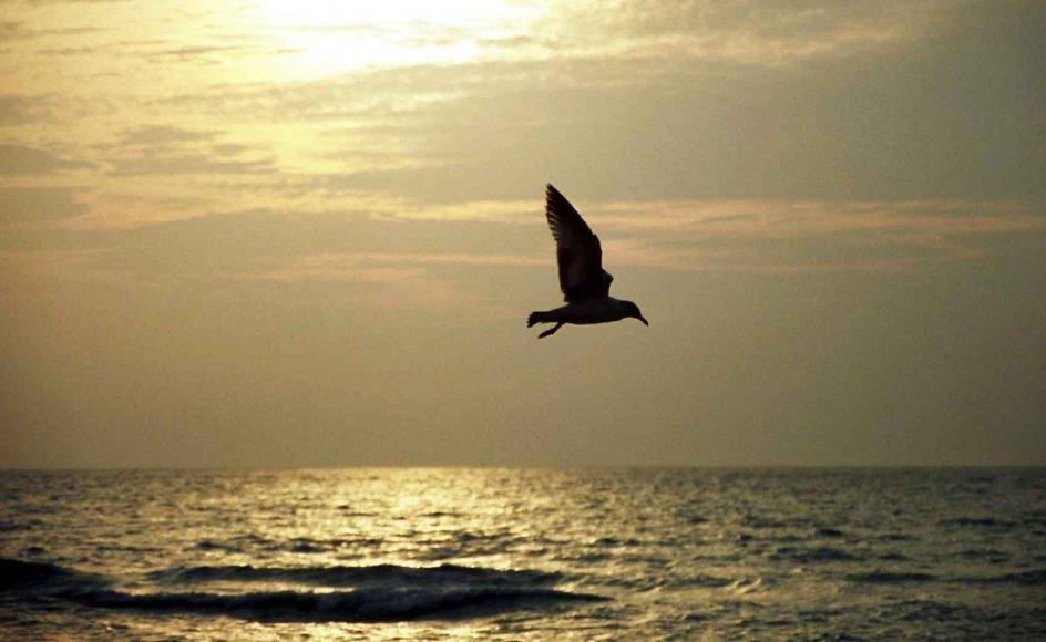 Dagen i dag er af FN udnævnt til international havdag. Og havet har brug for opmærksomhed.