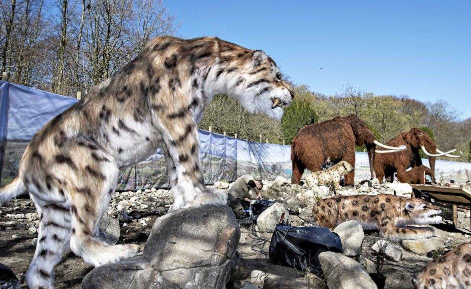 For tre år siden kunne besøgende i Aalborg Zoo opleve fortidens dyr som uldhårede mammutter og europæiske sabelkatte. Dyrene fra istiden var dog modeller og lavet af en kunsthåndværker, men om nogle år gør ny genteknologi det måske muligt at se de uddøde dyr i levende live. –