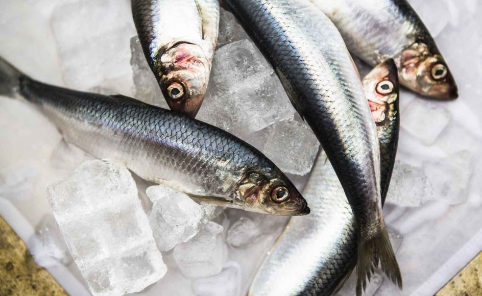 Fiskeolie indeholder flerumættede fedtsyrer. De findes i fede fisk som sild, laks og makrel. (Arkivfoto)