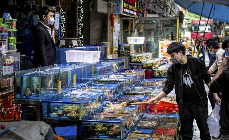 Markedet i Guangzhou i Guangdong-provinsen i Sydkina var tidligere kendt for at sælge eksotiske vilde dyr som krokodiller, men efter udbruddet af corona i Kina er de boder, der sælger vilde dyr, blevet lukket. Billedet er taget den 25. februar i år. Den 24. februar forbød de kinesiske myndigheder handel med vilde dyr for at bekæmpe coronavirus, der har kostet mindst 3000 kinesere livet. – Foto: Epa/AlexPlalevski/Ritzau Scanpix.