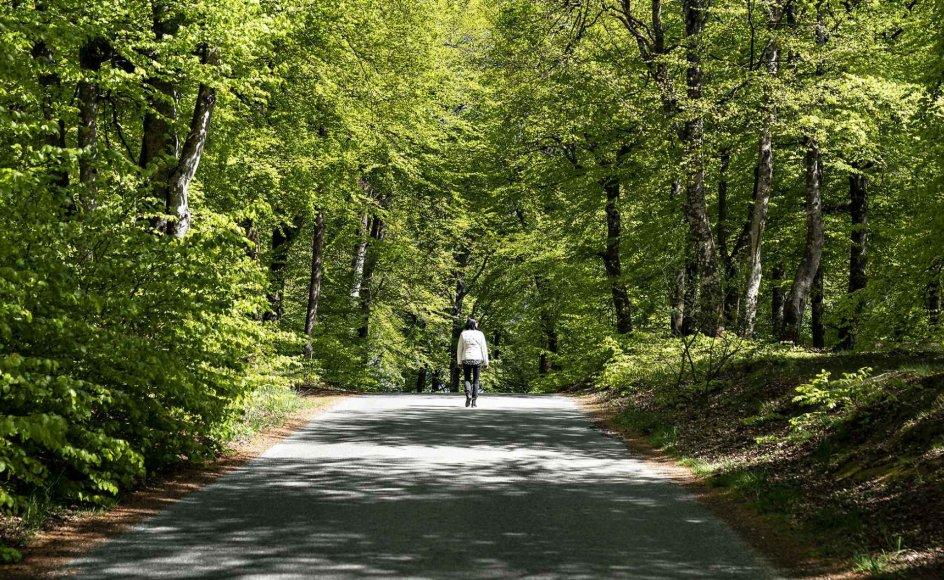 Regeringen lovede blandt andet mere urørt skov til det danske landskab, men resultaterne er ikke gode nok, mener flere organisationer