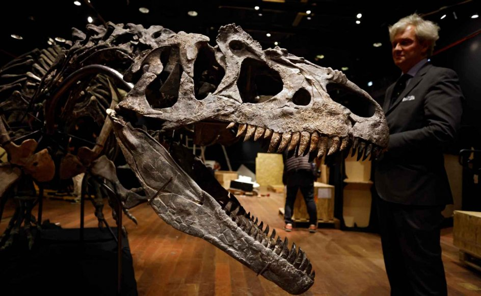 Palæontologer betegner allosaurs som forgængeren til den mere berømte tyrannosaurus rex.