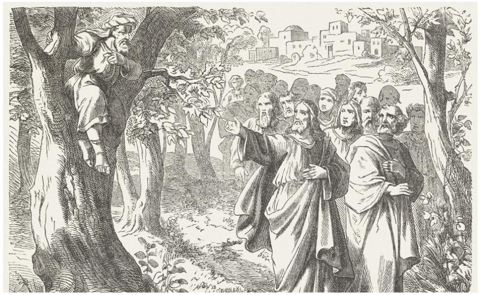 """""""Zakæus, skynd dig at komme ned! I dag skal jeg være gæst i dit hus,"""" sagde Jesus, da han så ham sidde i træet. Og Zakæus tog ivrigt imod.  Illustration: Julius Schnorr von Carolsfeld/Getty Images"""