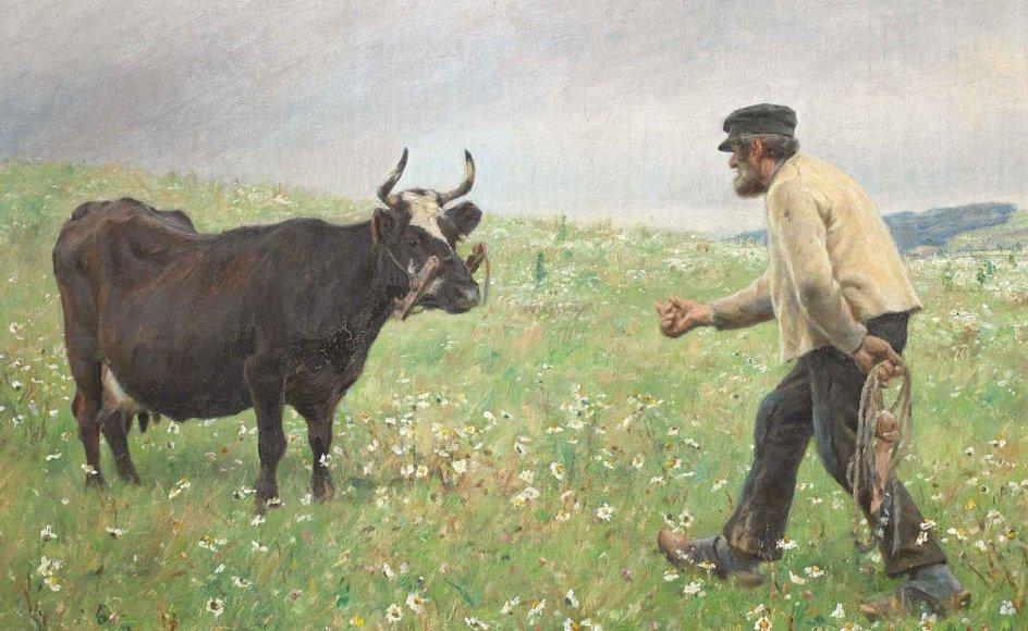 """Den røde ko eller Rød Dansk Malkerace, som den rigtigt hedder, er nærmest lidt fortærsket som dansk nationalsymbol. Men faktisk er den i dag tæt på at være udryddet. Her ses den afbilledet på M. Therkildens oliemaleri """"En ko løs"""" fra 1890, der hænger på Statens Museum for Kunst. – Foto: Statens Museum for Kunst."""