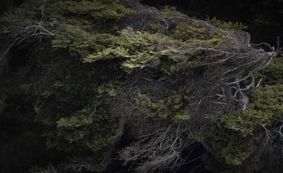 """I """"Thyland"""" skabes autenticiteten også gennem dialekt og urovækkende naturbilleder. – Foto: CPH:DOX."""