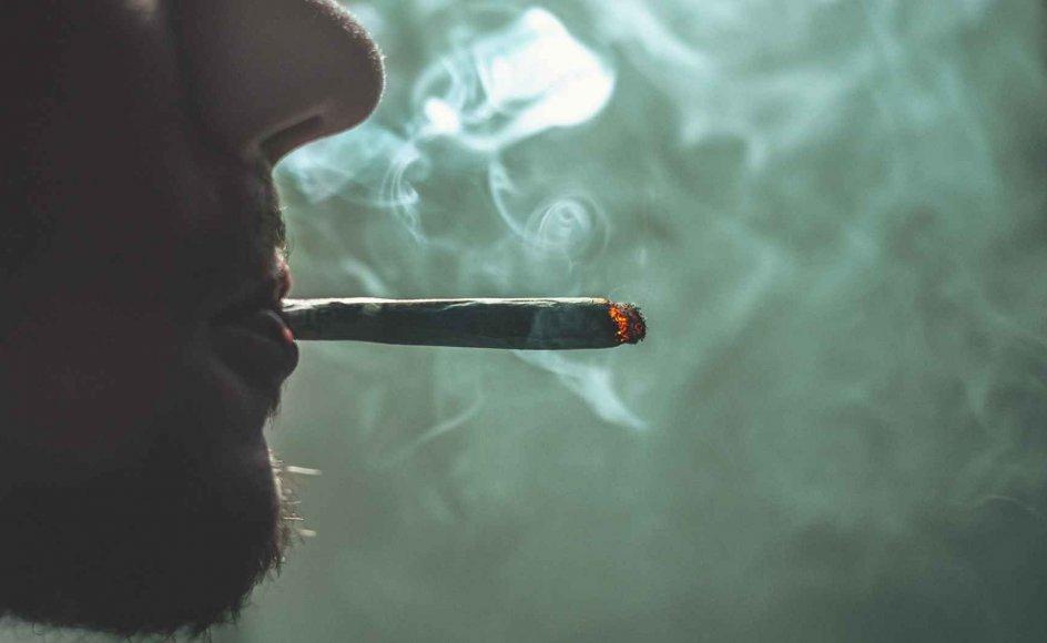 Professor Mads Uffe Pedersen og overlæge Henrik Rindom mener, at debatten i Danmark om eksempelvis legalisering af cannabis er gået i hårdknude.