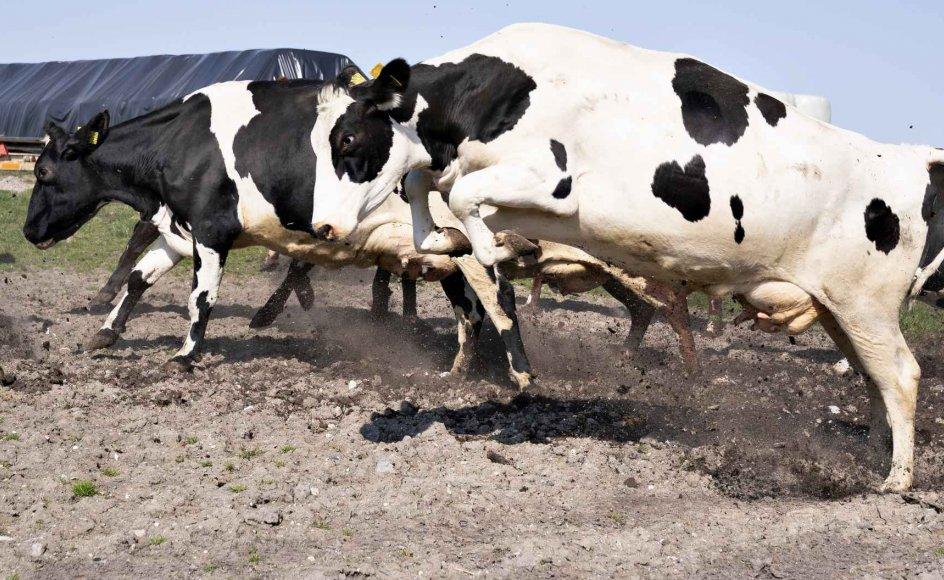 Et grønt regeringsudspil på landbrugsområdet møder heftig kritik fra støttepartier, men forsker mener, at det har den rette balance. (Arkivfoto)