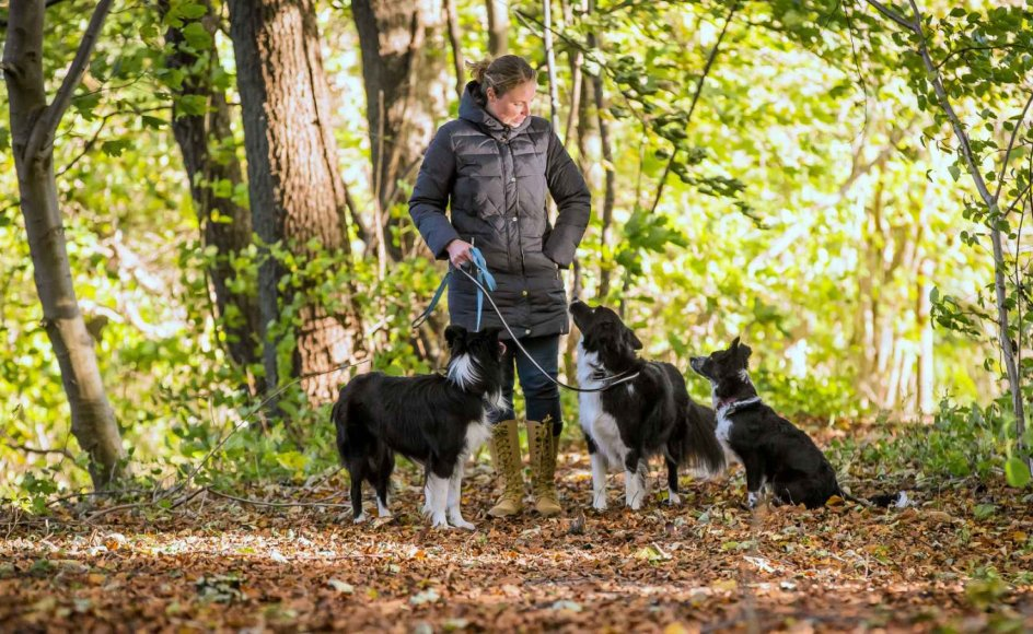 Når hunden bliver teenager, suser hormonerne rundt i kroppen, og den får svært ved at koncentrere sig. Hundetræner Christina Berantzino understreger, at det er en helt normal fase og sker for langt de fleste.