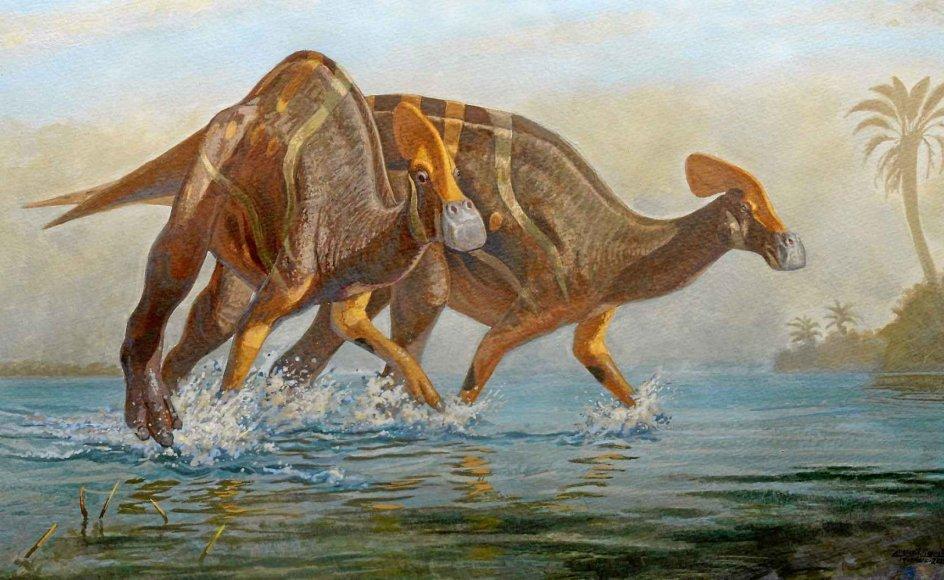 Sådan så den nyopdagede dinosaurus måske ud ifølge forskerne.