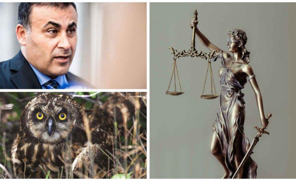 Naser Khader er frifundet i injuriesag, flere domstole dømmer til fordel for klimaet, og miljøminister Lea Wermelin (S) vil redde en bestemt type ugle.