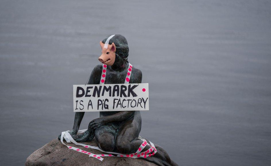 I januar 2020 stod Veganerpartiet bag en happening på Langelinie i København, hvor Den Lille Havfrue blev klædt ud som en gris. Det var en protest mod pladsforholdene i dansk svineproduktion.
