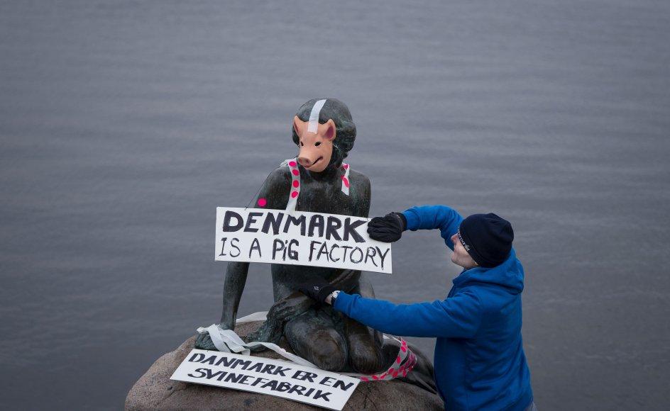 Veganerpartiet laver happening og klæder Den Lille Havfrue ud som en gris, på Langelinie i København onsdag den 29. januar 2020. Happeningen er en protest imod pladsforholdene i den danske svineproduktion. (Foto: Liselotte Sabroe/Ritzau Scanpix)